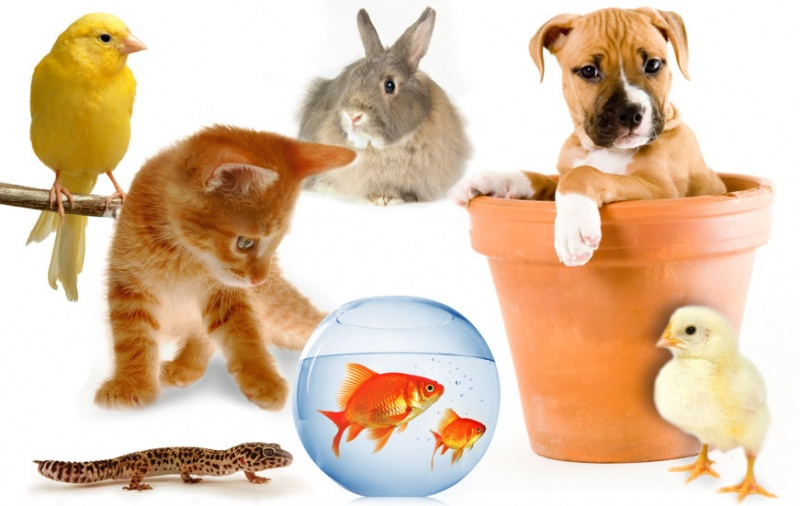 File:Group-of-pets.jpg